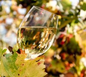 Weinglas mit Weiwein im herbstlichen Weingarten